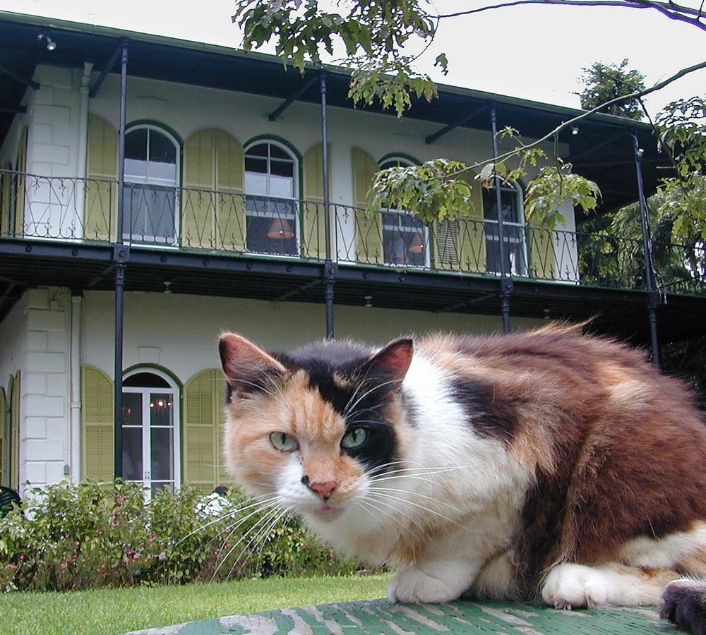 Hemingway House cats