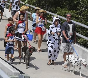 dogs in Florida Keys costumed bridge run