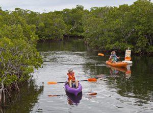 Kayaking Pennekamp Park