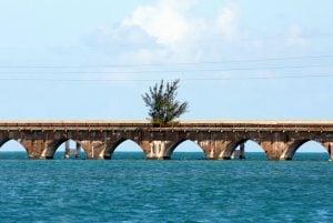 Tree on Florida Keys Old Seven Mile Bridge