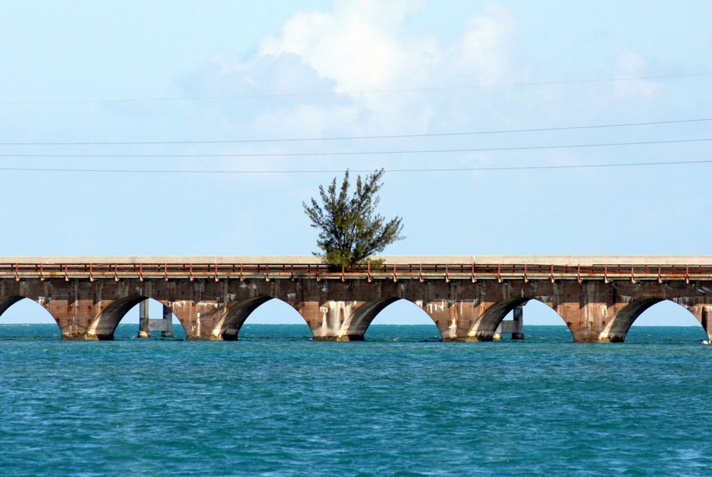 Tree on Florida Keys Old Seven Mile Bridge