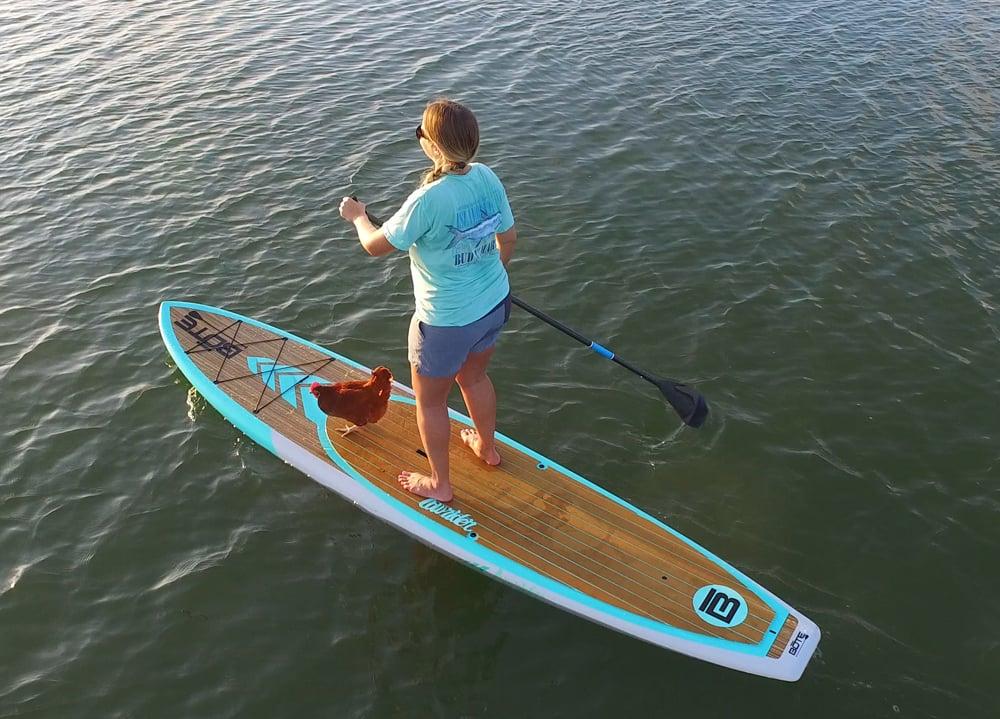 paddleboarding chicken Florida Keys