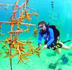 Coral restoration Florida Keys