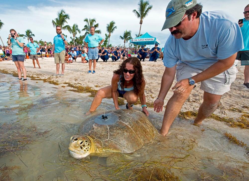 Turtle Release Tour de Turtles Florida Keys