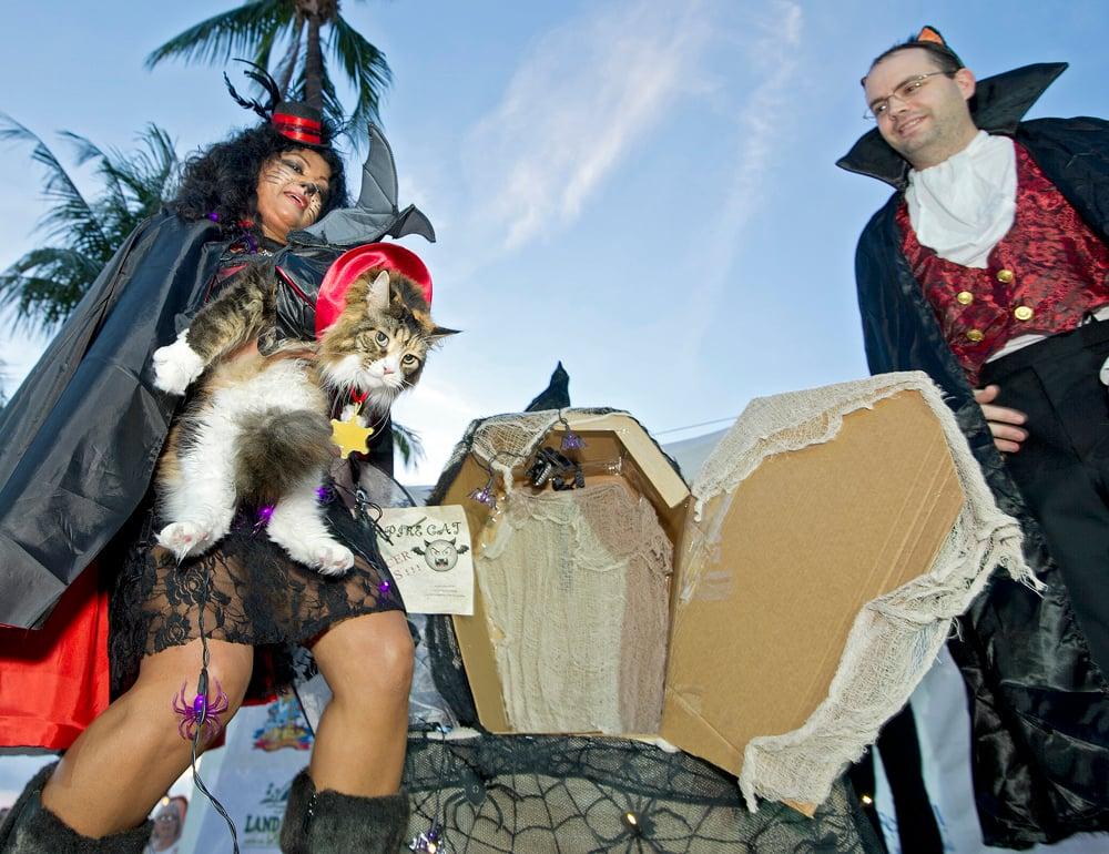 cat in costume Key West Pet Masquerade