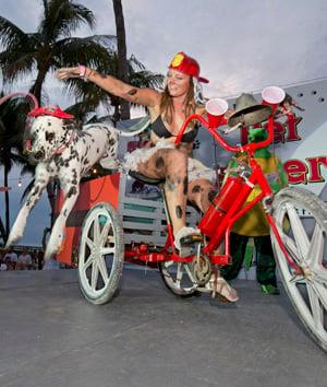 costumed dog Key West Pet Masquerade
