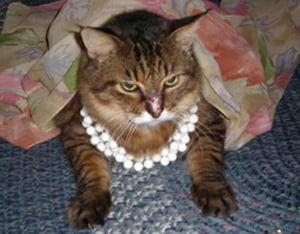 cat in costume Key West