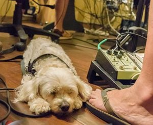 Dog in recording studio
