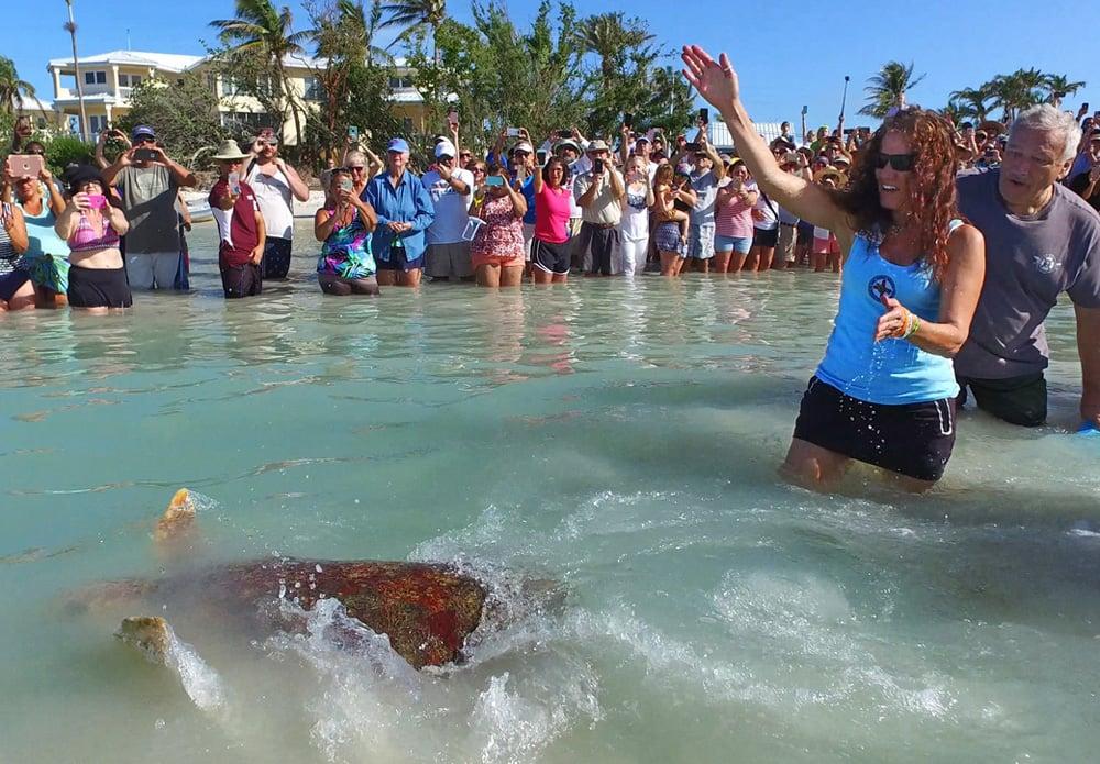 Turtle Release Florida Keys