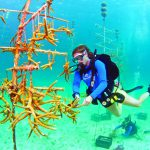 Diver Florida Keys coral restoration