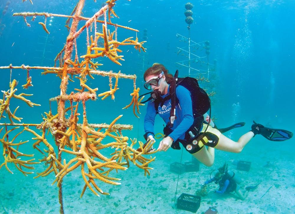 Diver Florida Keys coral restoration