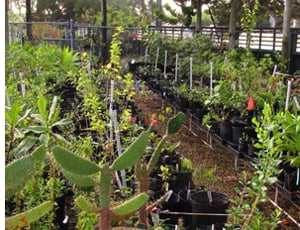 Key West Tropical Forest & Botanical Garden plant nursery