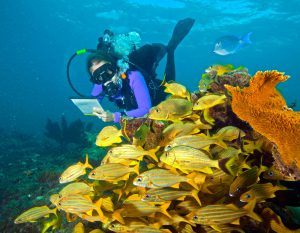 Florida Keys reef survey