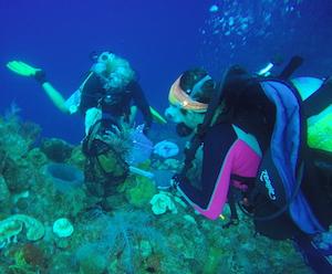 underwater scientist Florida Keys