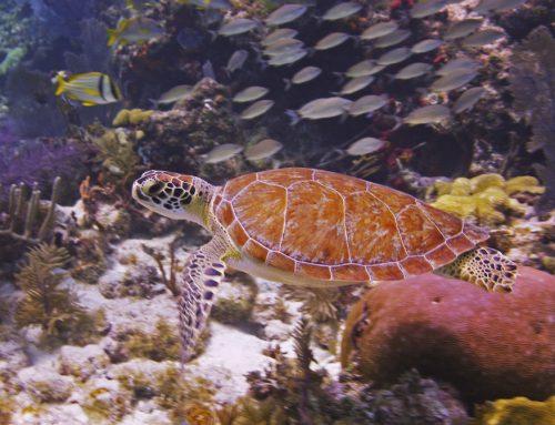 Three Florida Keys Adventures For Your Fall Bucket List