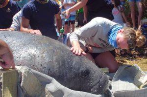 manatee release Florida Keys