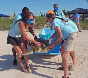 turtle release Florida Keys