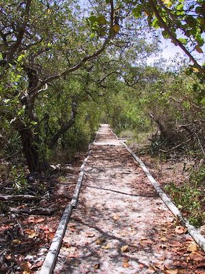 Nature trail Upper Keys state park