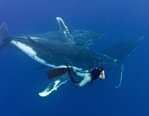 Stephen Frink photographing whales