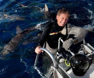 Stephen Frink ocean sharks