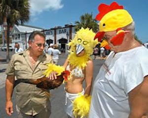ChickenFest Key West