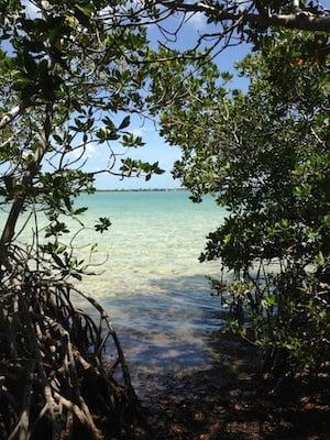 Lower Keys mangroves and water