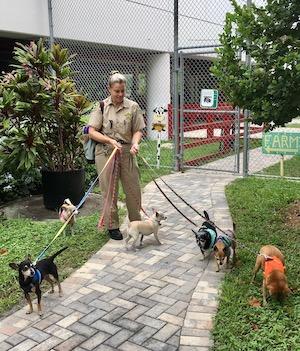 Jeanne Selander Key West dogs