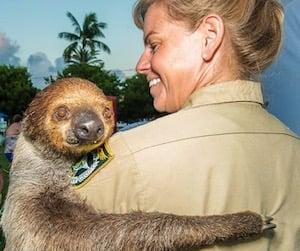 Mo the Sloth Florida Keys