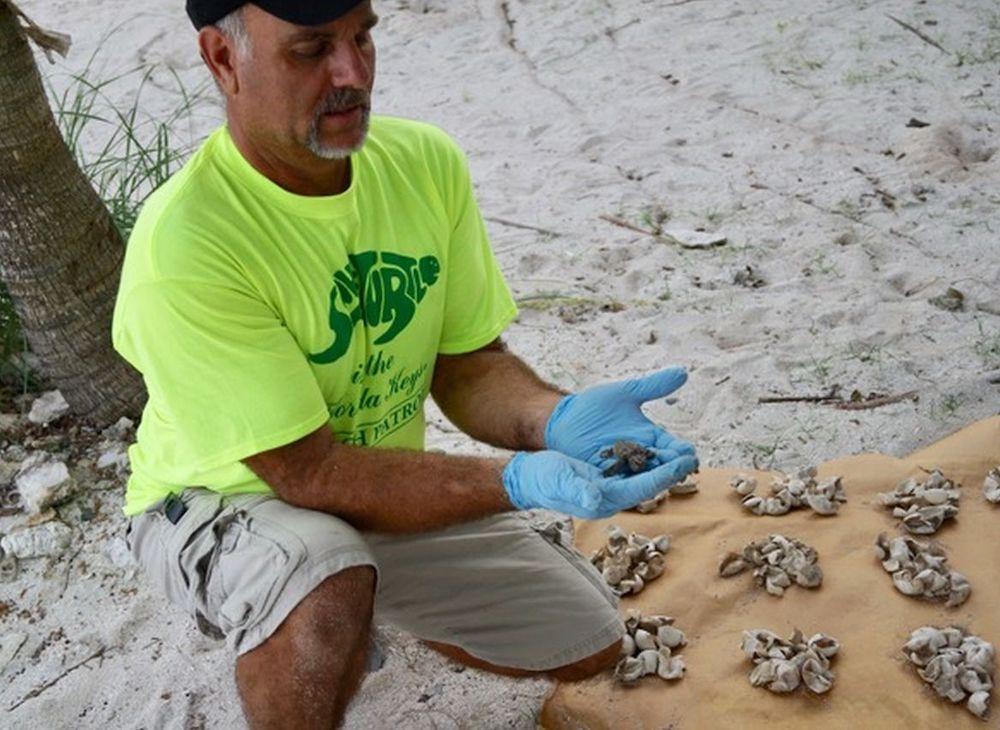Save a Turtle volunteer Florida Keys