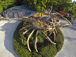 Betsy lobster Rain Barrel Islamorada