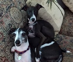 Key West dogs