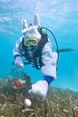 Underwater Easter bunny in Florida Keys National Marine Sanctuary