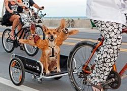 A canine with unnerving extra heads takes part in a past Zombie Bike Ride. (Photo by Mike Marrero, Florida Keys News Bureau)