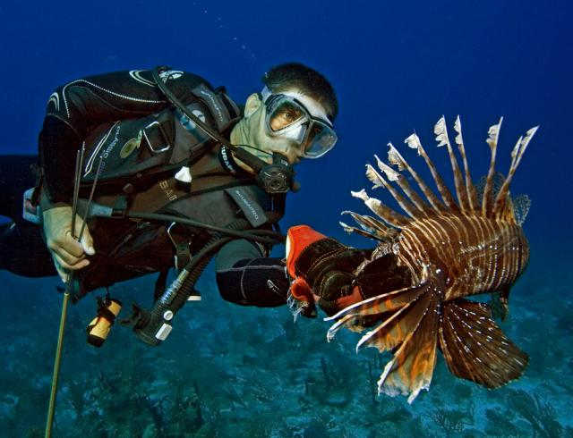 Visiting divers are encouraged to help remove invasive lionfish.