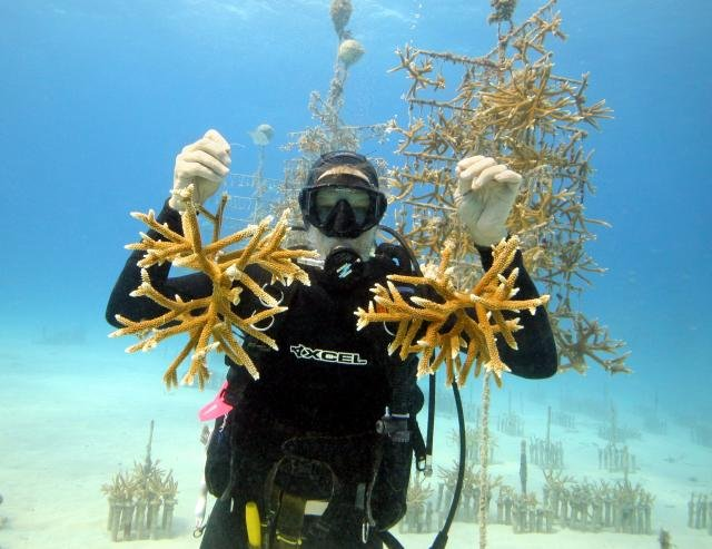 Coral restoration efforts in an underwater jungle. Credit: Kevin Gaines