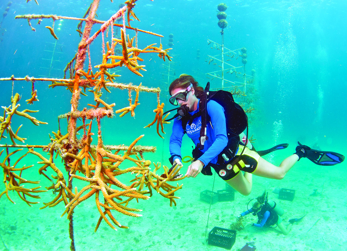Coral Restoration Foundation (c) Tim Grollimund Florida Keys News Bureau