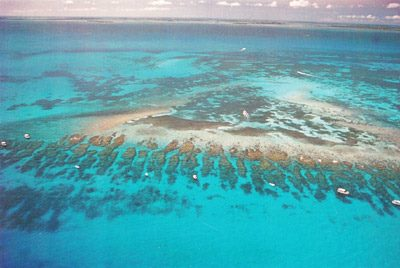 Reef Protection to Highlight Lower Keys Underwater Music Festival July 13