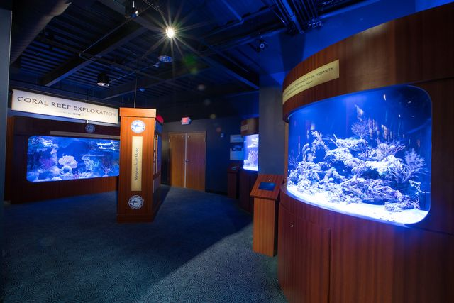 The Coral Reef Exploration exhibit at the Florida Keys History & Discovery Center, in Islamorada.