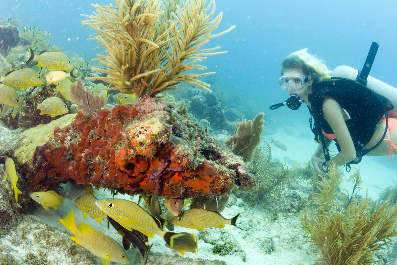Connect & Protect: Living Reefs