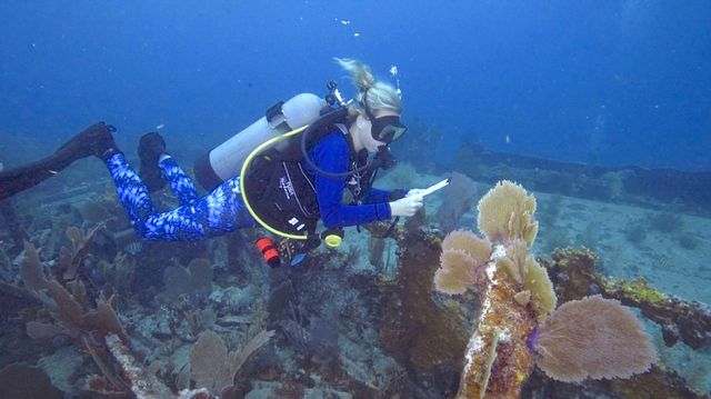 A diver helps survey the reef to collect data.