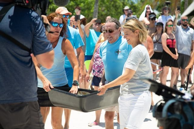 Samantha Brown visits Marathon's Turtle Hospital and participates in a sea turtle release.