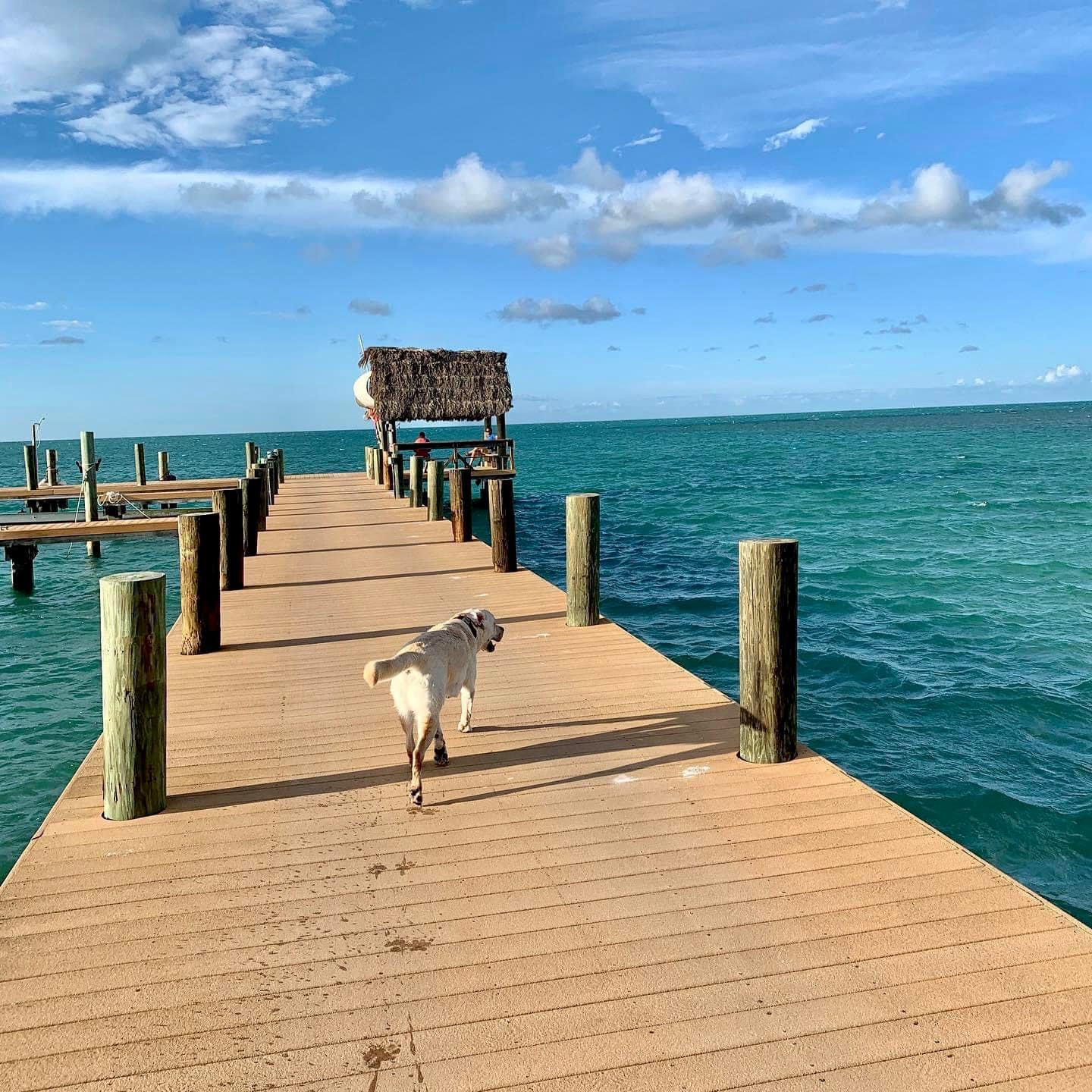 The 5-acre Pigeon Key, accessible by ferry (and pet friendly) was a camp for laborers building the 1900s-era Florida Keys Over-sea Railroad, conceived by Henry Flagler.