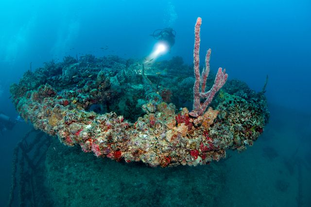 The wreck is encrusted with colorful soft corals and sponges. Image: Stephen Frink/Florida Keys News Bureau