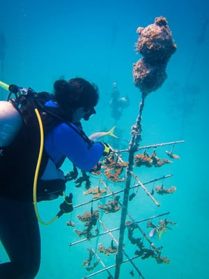 Volunteer to help with coral restoration on the world's third-largest coral barrier reef, which parallels the island chain, with marine scientists.