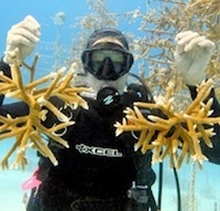 Celebrate World Oceans Day at Florida Keys' Second Annual 'Coralpalooza' Click for details.