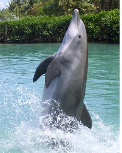 Visitors can get wet above and below water with the Dolphin Discovery program.