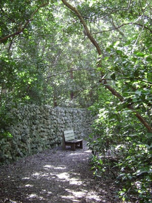 dagny johnson key largo hammock botanical state park features one of the largest tracts of west six state parks  hidden jewels in upper florida keys      rh   fla keys