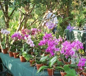 Browse And Buy A Wide Variety Of Plants, Palms And Orchids As Well As  Healthy