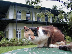 Ernest Hemingway lived and wrote in Key West from 1929 to 1939, and descendants of  his six-toed cats still live on the grounds of the Hemingway Home & Museum. Image: Andy Newman