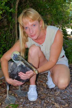 Kelly Grinter left a career in graphic design nearly 20 years ago, and discovered rescuing and rehabilitating injured birds was a new passion.